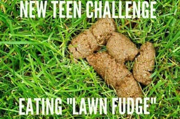 lawn fudge.
